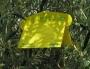 KIT DACOTRAP 9 trappole  9 Feromoni MOMENTANEAMENTE NON DISPONIB
