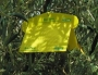 KIT DACOTRAP 9 trappole +9 Feromoni MOMENTANEAMENTE NON DISPONIB